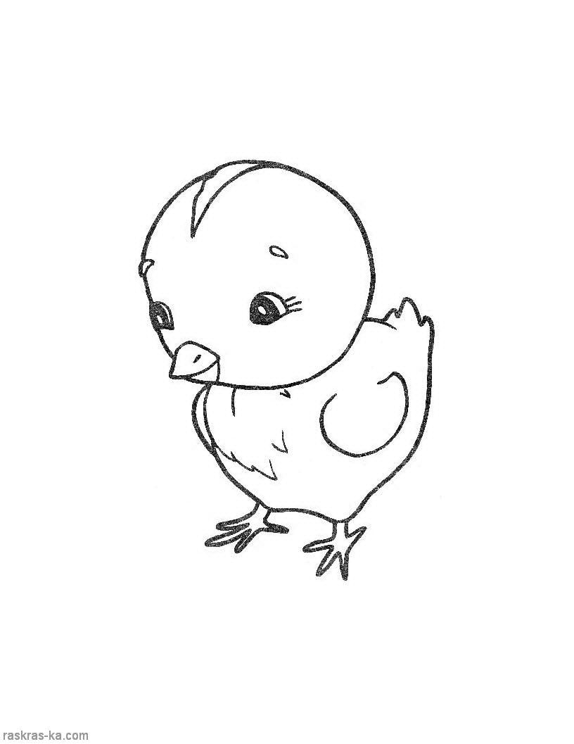 картинки с животными раскраски: