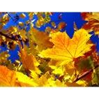 Раскраски осень, листопад, дожди