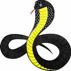 Раскраски о змеях, гадюках, ужах