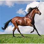 Раскраски лошади. Домашние животные