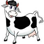 Раскраски коровы, быки, телята