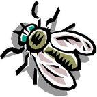Раскраска муха. Насекомые