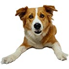 Породы собак. Распечатать бесплатно раскраски о домашних животных