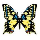 Бабочки. Распечатать раскраски про насекомых