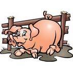 Раскраски домашние животные. Свиньи и поросята