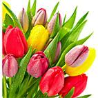 Раскраски весенних цветов распечатать. Тюльпаны